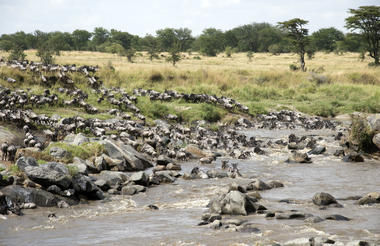Mara River Crossing- a great show on Earth